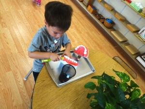 Montessori-American-School-5HmAWe